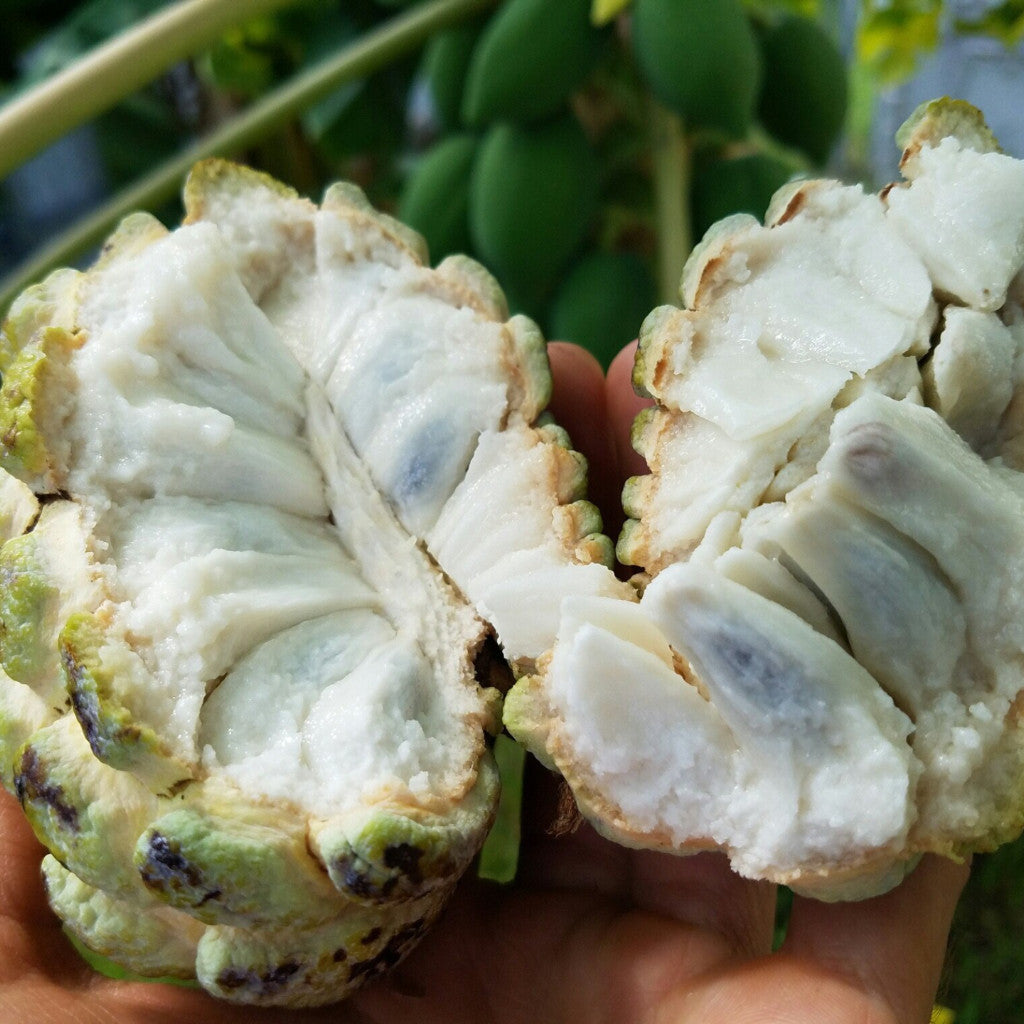 Sugar Apple Pre Order Miami Fruit
