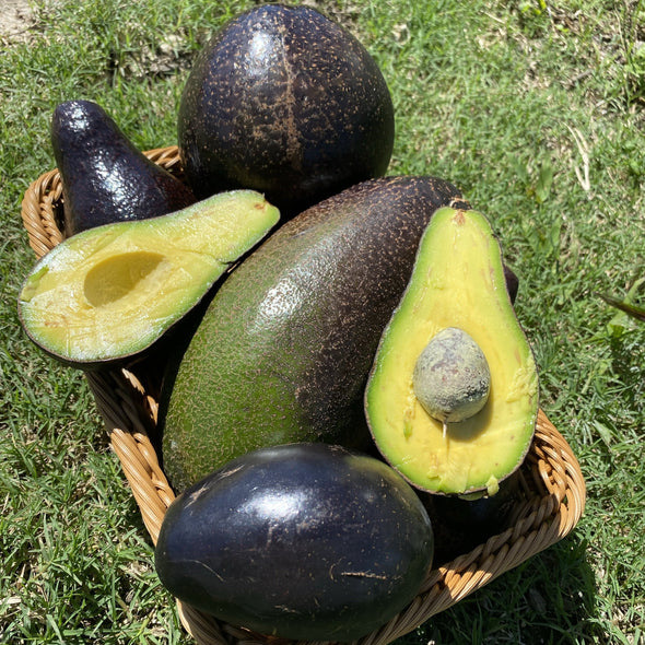 Black Avocado Box