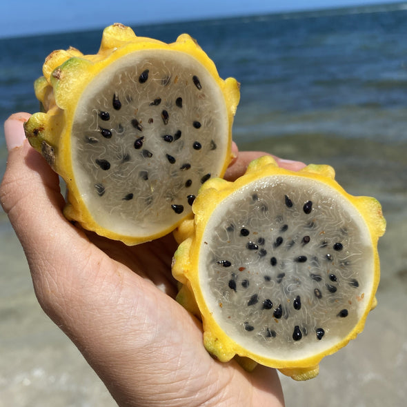yellow dragonfruit at the beach miamifruit