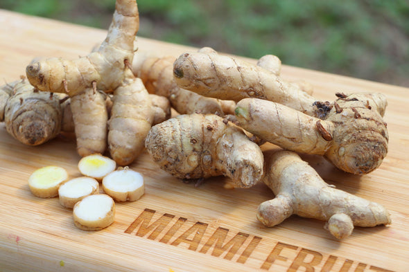 White Turmeric Root