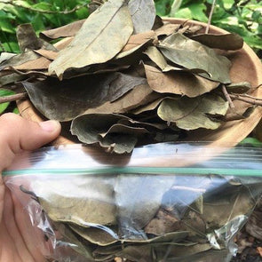 Dried Mountain Soursop Leaves