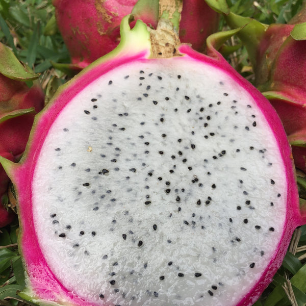 White Pitaya (Dragonfruit) Box
