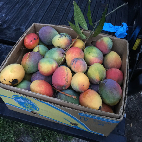 Mango Box *Pre-Order for 2021*