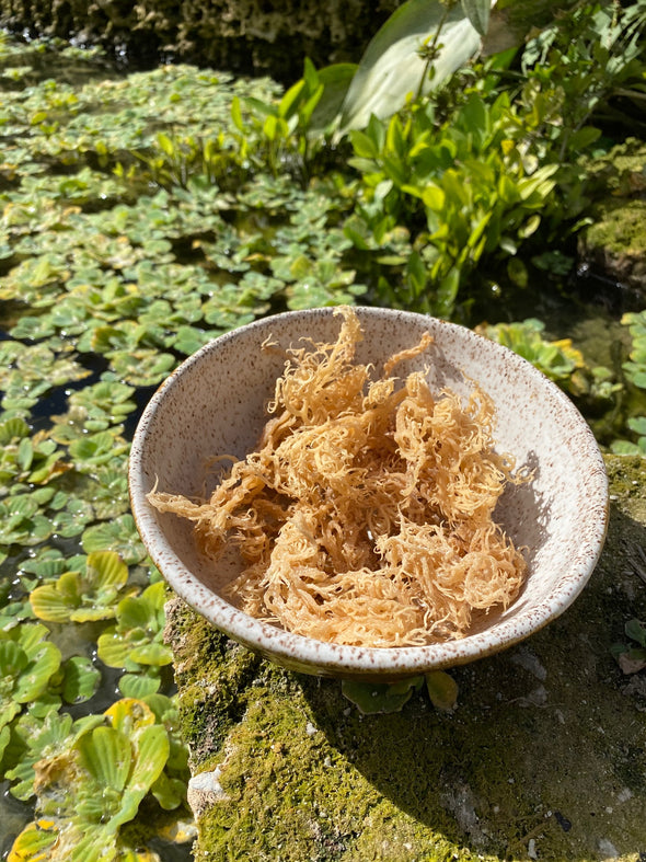 Wild Harvested Gold Sea Moss