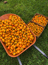 Tropical Persimmon Box