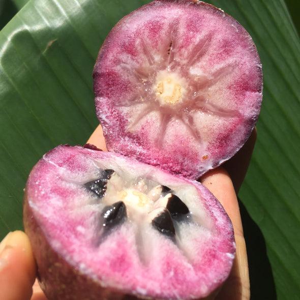 Star Apple - Caimito (Cainito)