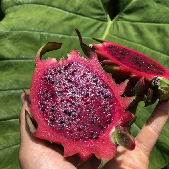Red Dragonfruit (Pitaya)