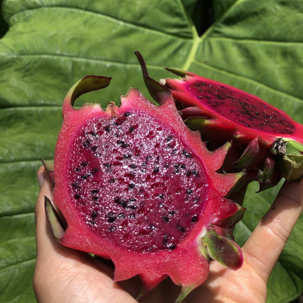 Red Pitaya (Dragonfruit) Box