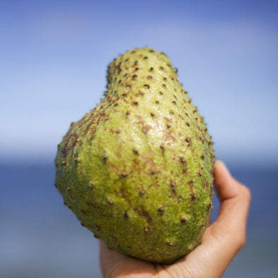 Soursop (Guanabana) Box
