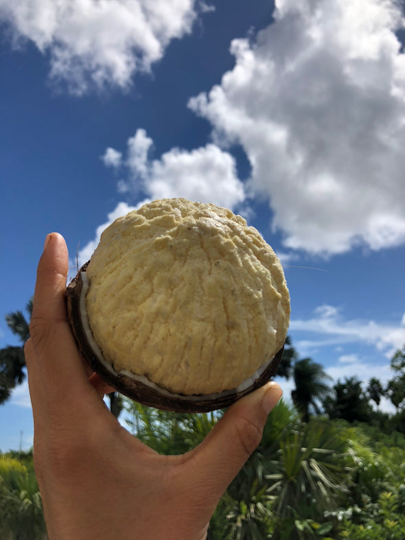 Sprouted Coconut