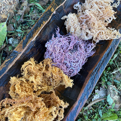 Sea Moss Variety Pack