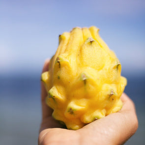 Yellow Dragonfruit (Pitaya)
