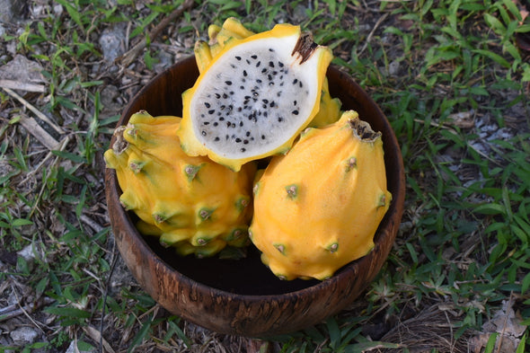 Yellow Dragonfruit (Pitaya) Box