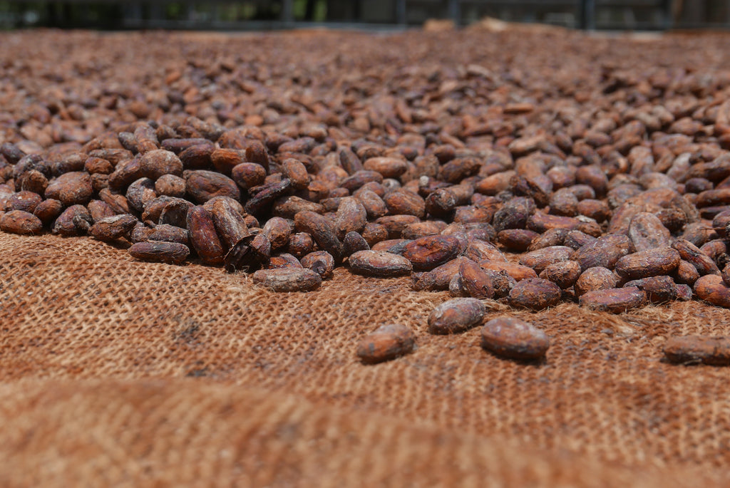 My trip to Ecuador with Republica del Cacao
