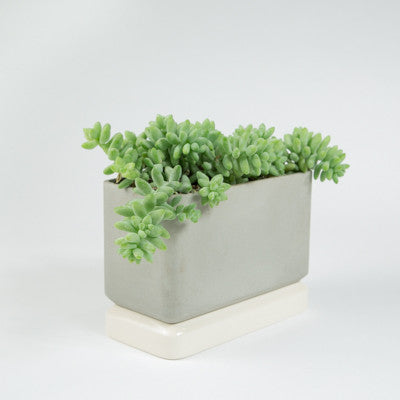 Sill Planters