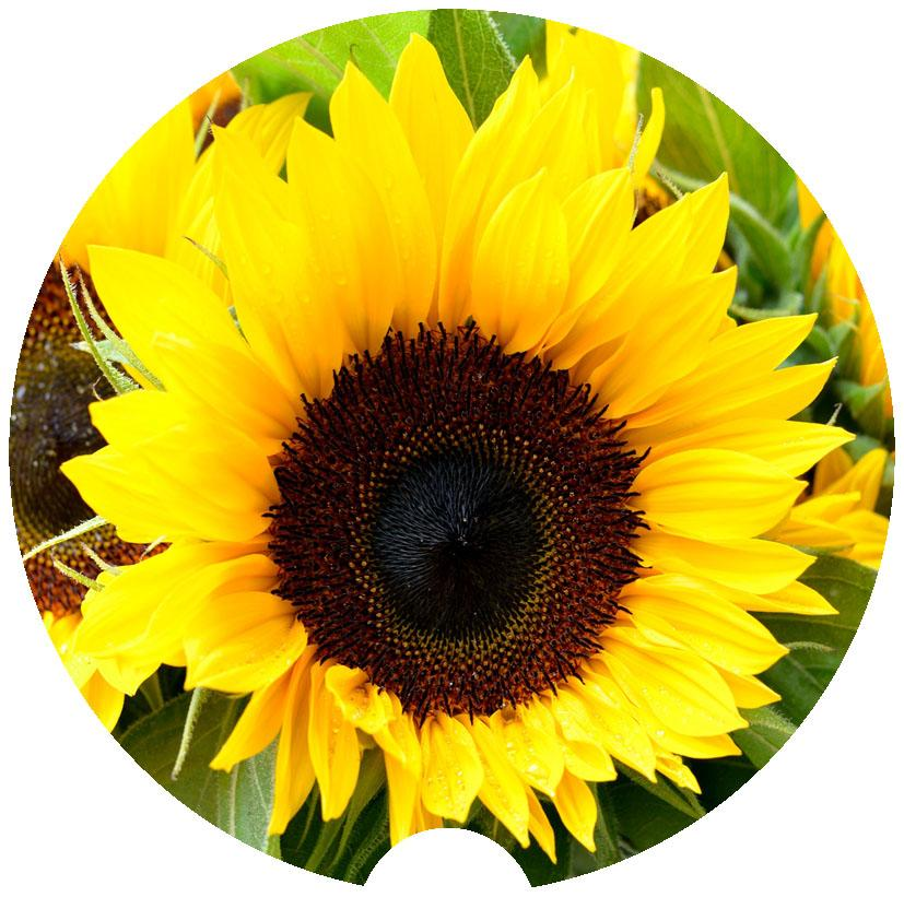 Sunflower Sandstone Car Coasters