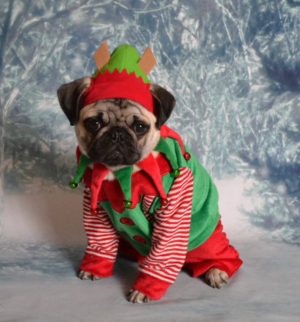 5 Perfect Presents for Pug Dog Lovers