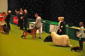 Six Wonderful Reasons Why I Loved Visiting Crufts Dog Show