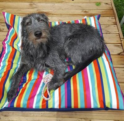 Dog lying on stripy water resistant mat