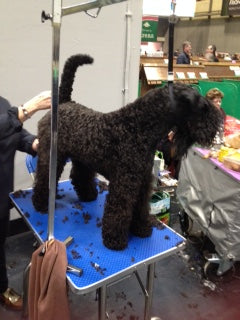Dogs on show at Crufts Dog Show
