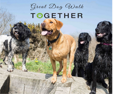 Great Dog Walk Together