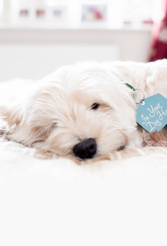 Westie showing dog themed gift stores logo