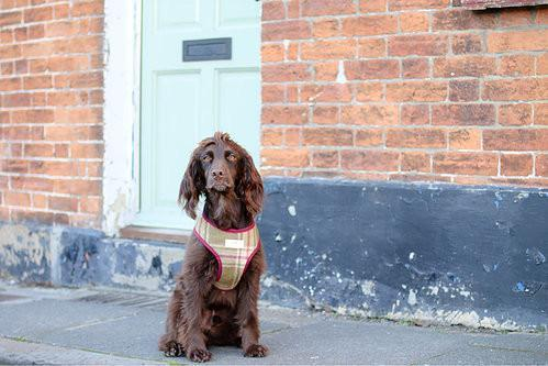Dog Clothing 'Scooby' Dog Harness