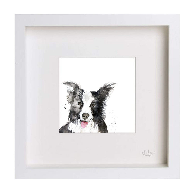 Print Framed in White Border Collie Dog Illustration Print