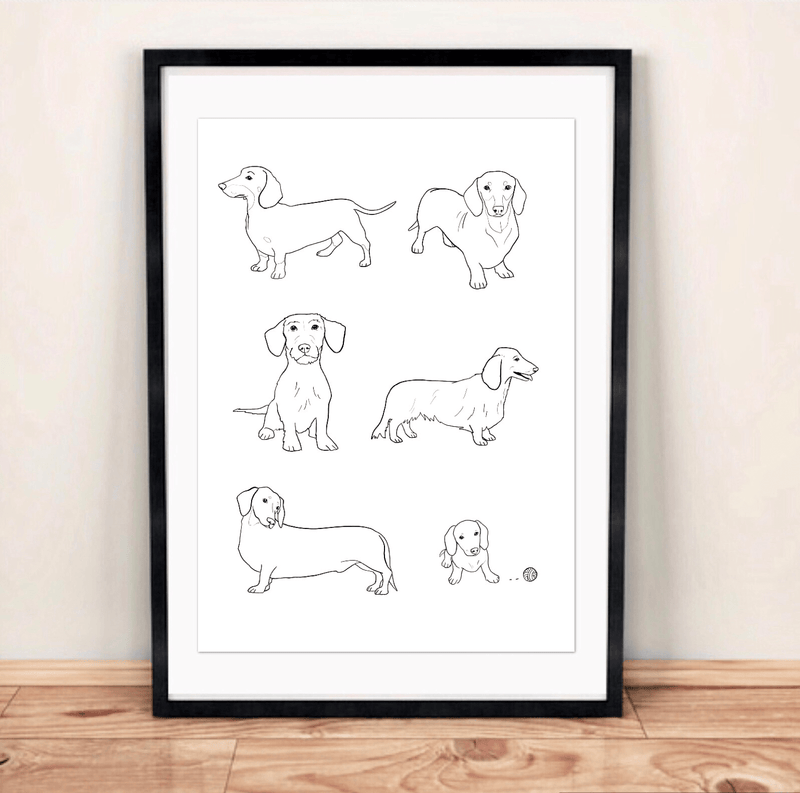 Print Dachshund Illustration