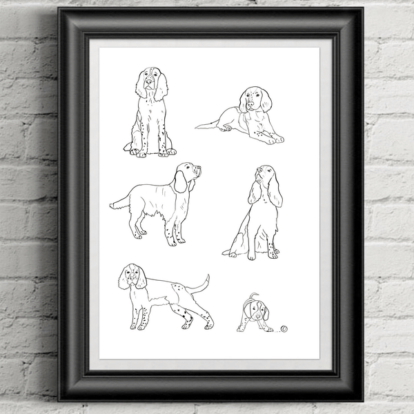 Spaniel Illustration