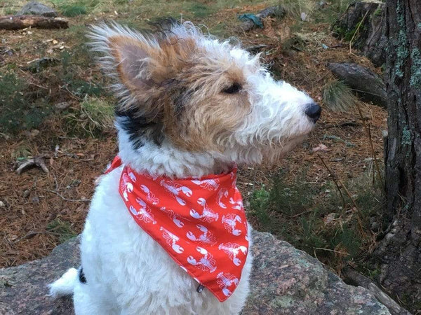 Dog Bandana Rock Lobster' Bandana