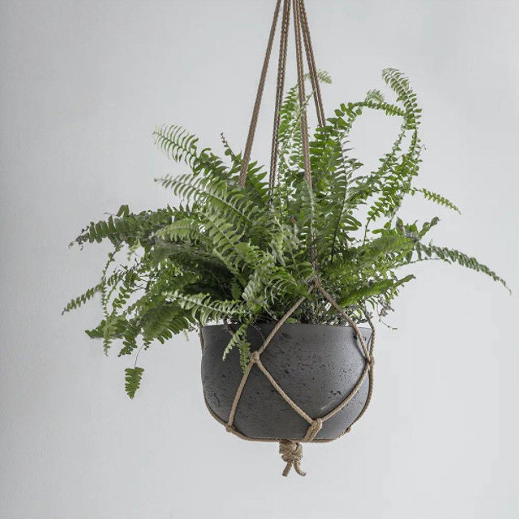 Stratton Hanging Pot Carbon Large, Plants by Insideout