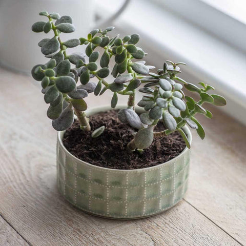 Sorrento Bowl Sage - insideout-home