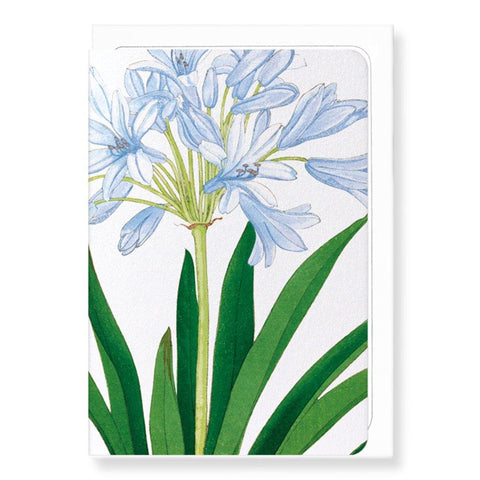 Agapanthus Card - insideout-home