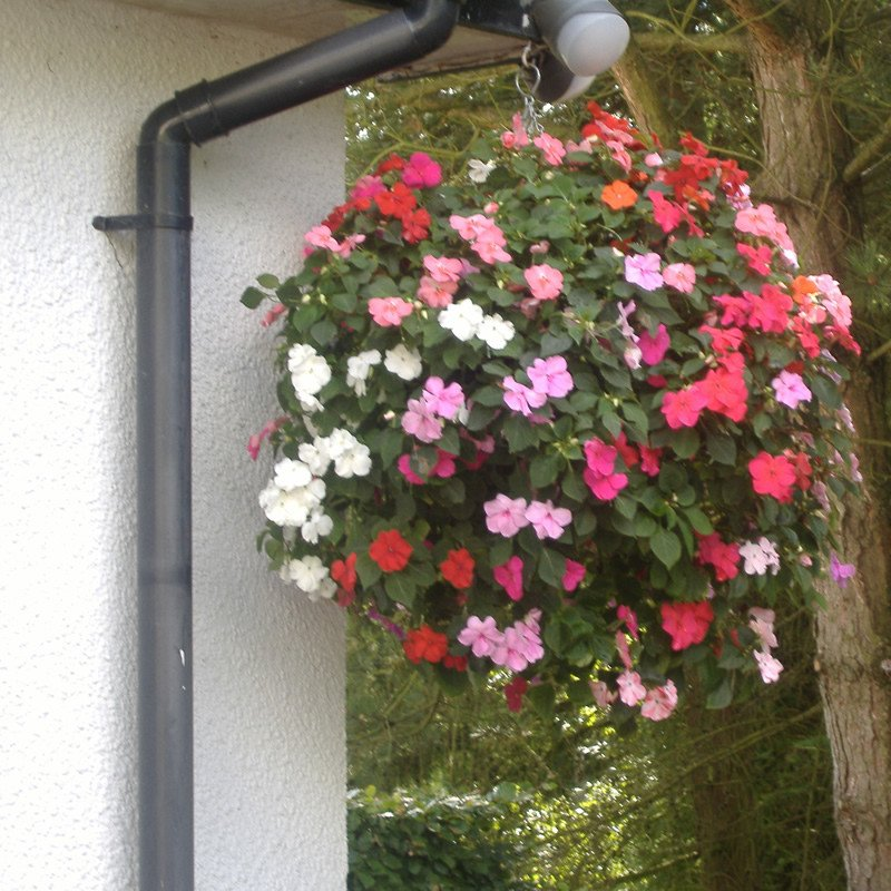 Easy Fill Hanging Basket - Planted