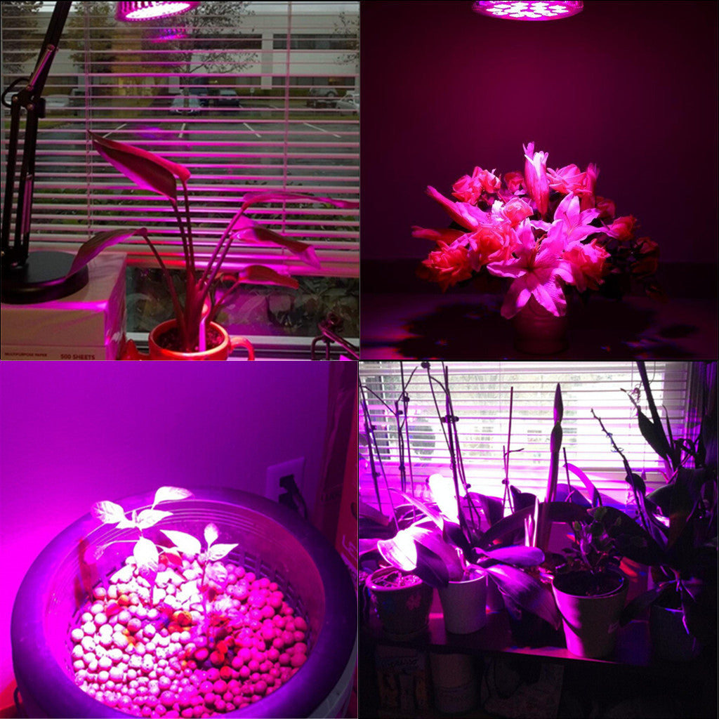 Pair 24W E26 LED Plant Grow Light Bulb Red Blue Indoor Hydroponic Greenhouse