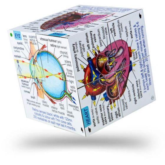 Zoobookoo Human Body Cube Book - educationaltoys.ie