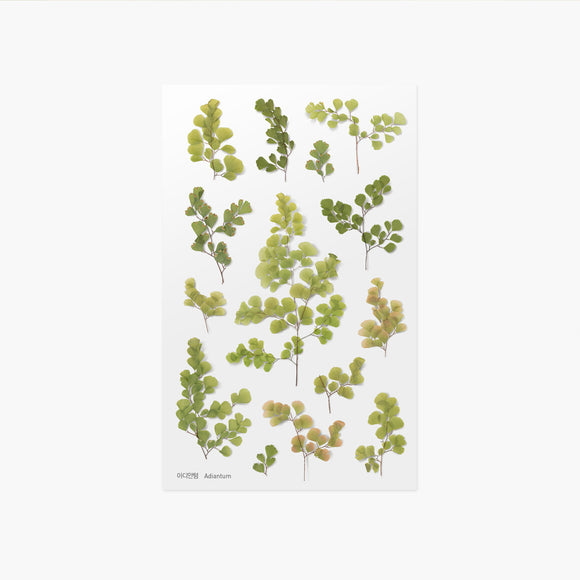 Appree Pressed Flower Sticker // Adiantum