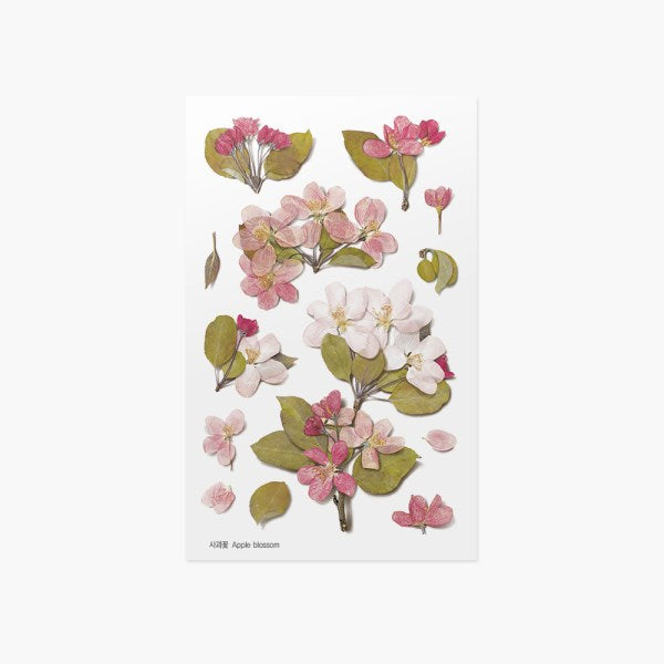Appree Pressed Flower Sticker // Apple Blossom