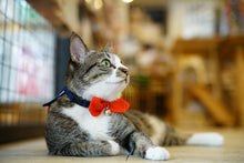 Load image into Gallery viewer, Mewji Cat Collar / Sailor