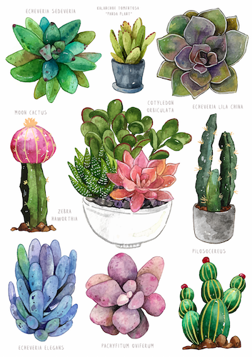 Watercolor Succulents Postcard