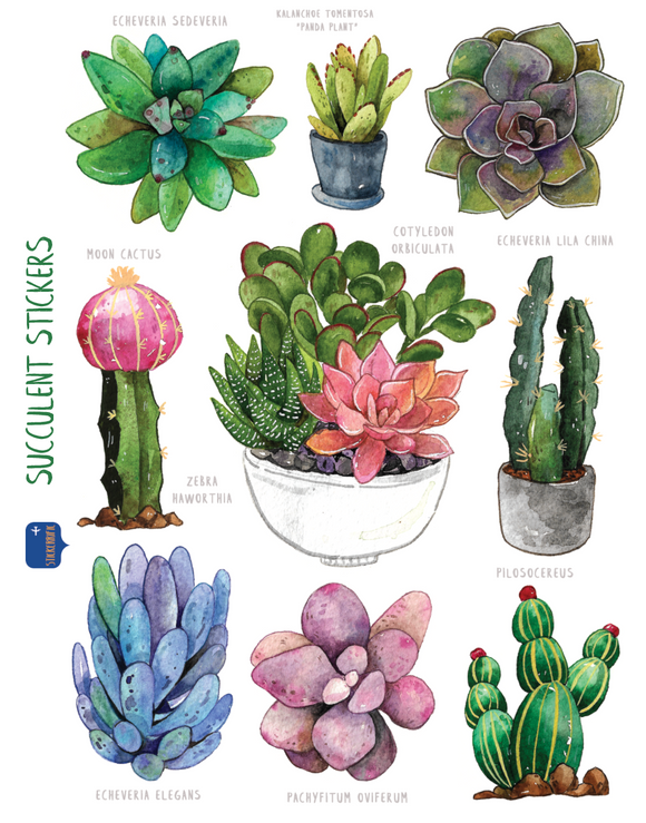 Watercolor Succulents Stickers
