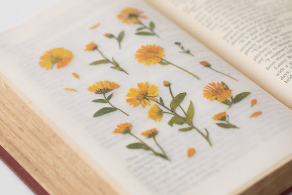 Appree Pressed Flower Sticker // Calendula