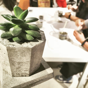 workshop: concrete planter x succulents