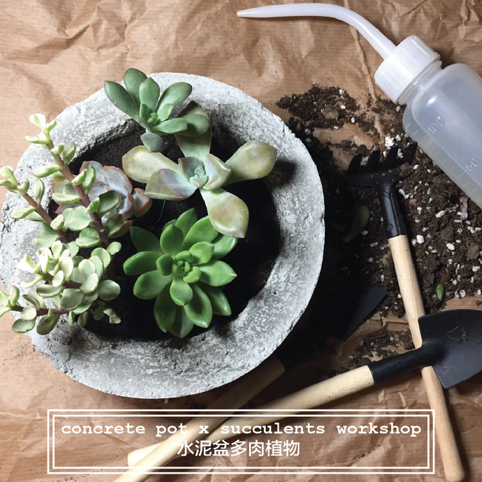 Workshop: concrete pot x succulents