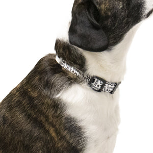 White Pet Collar