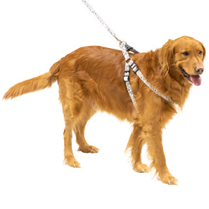 White Pet Harness