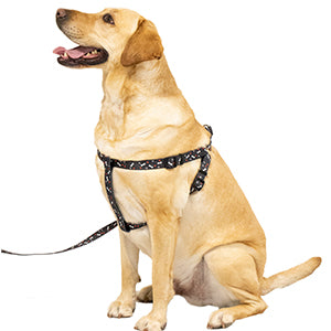 Black Pet Harness