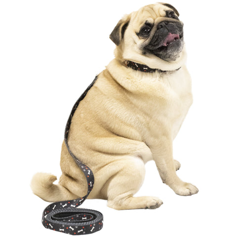 Black Pet Leash on pug