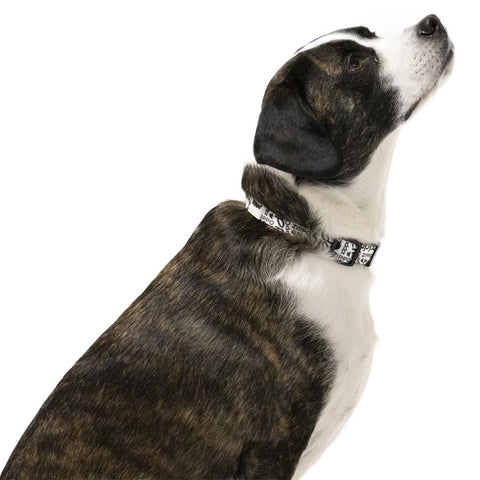 White Nylon Pet Collar medium dog